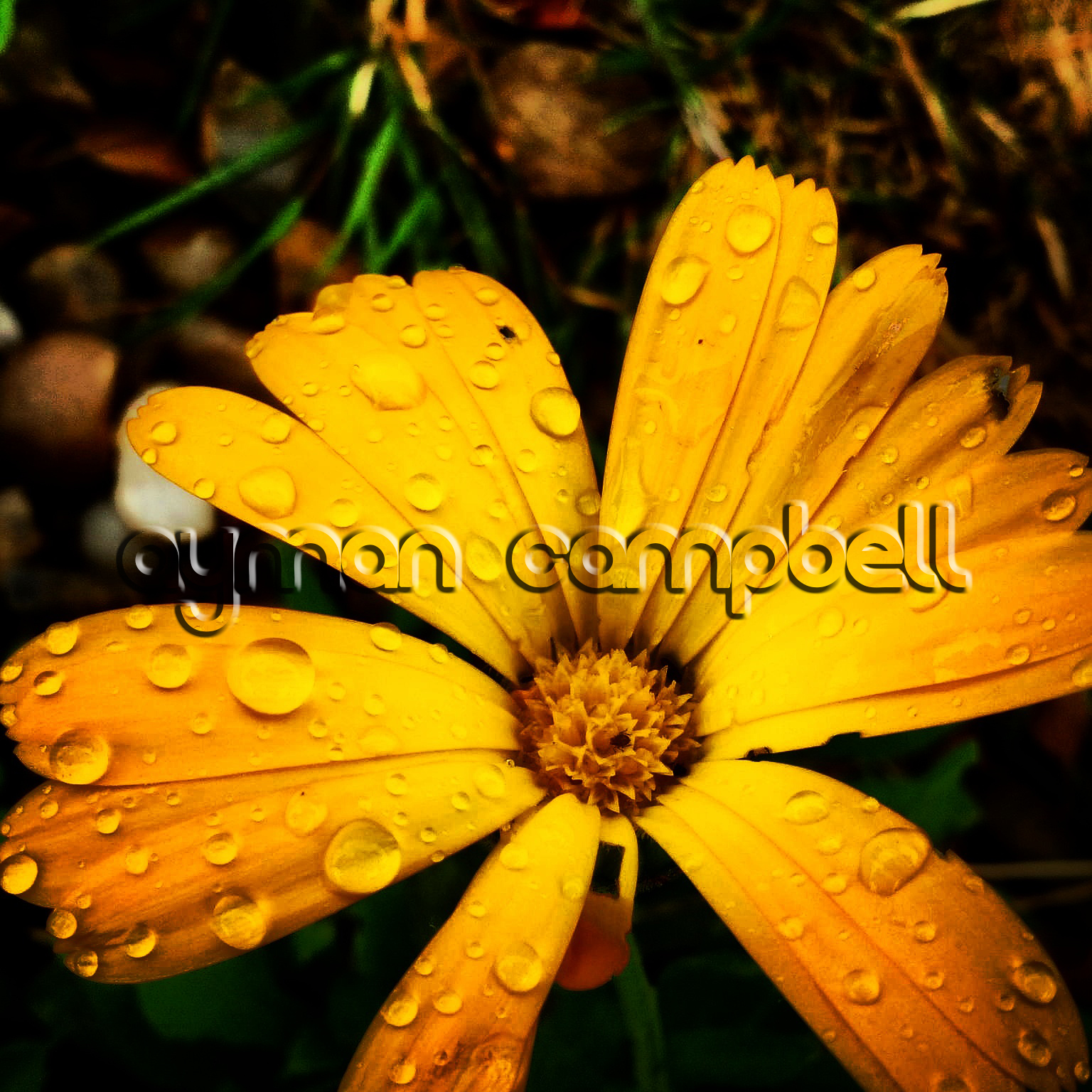 IMG_20140814_153117 (Watermarked)