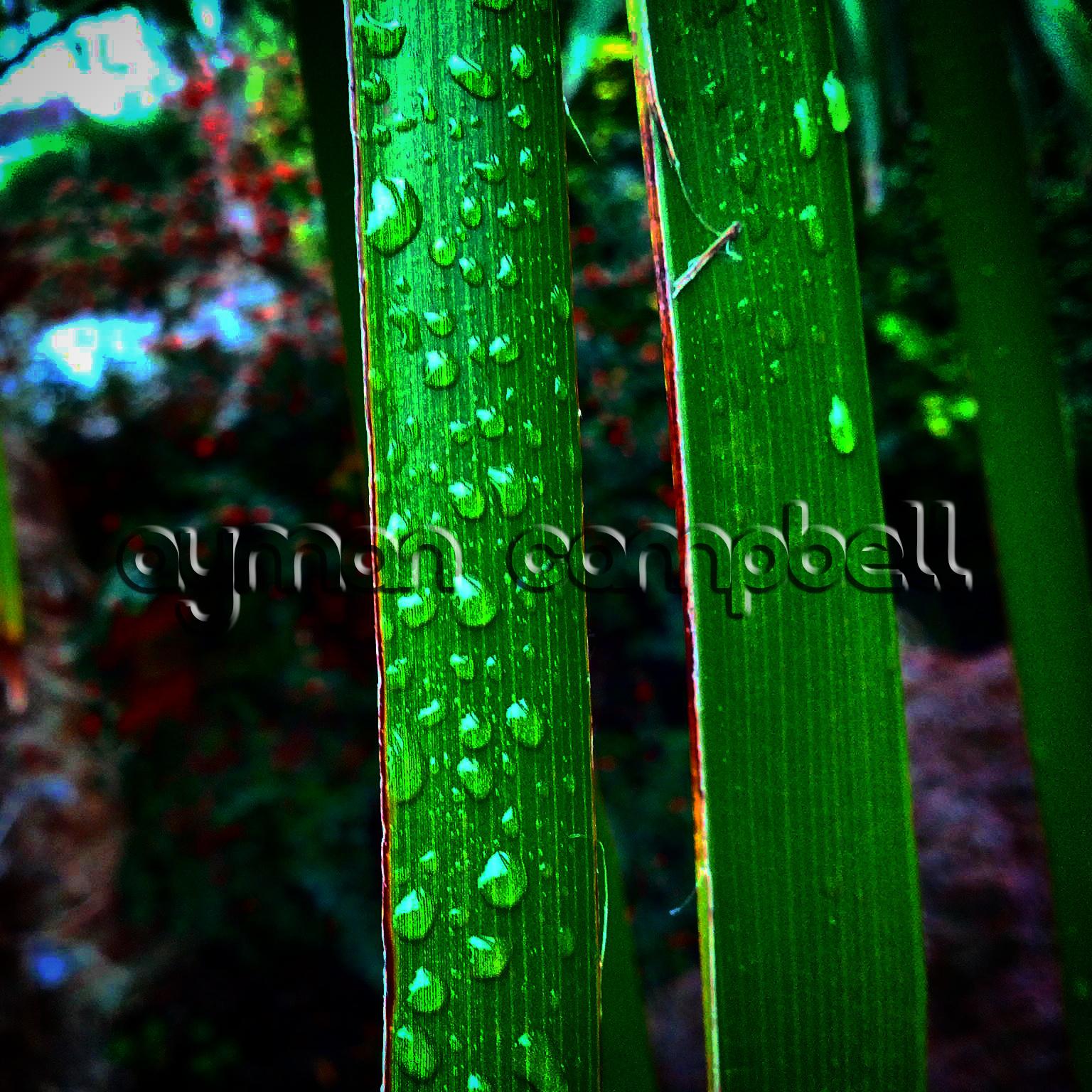 IMG_20140815_031001 (Watermarked)